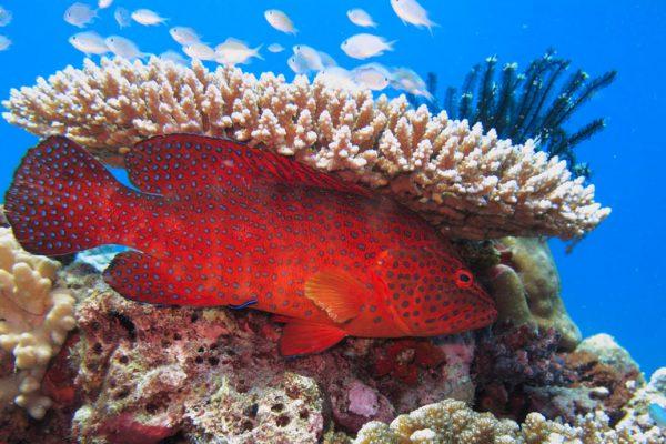 gangehi-diving-10