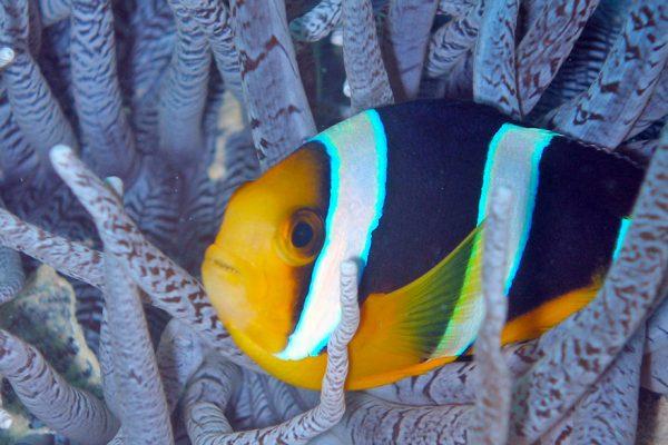 gangehi-diving-13